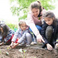 Kinder legen gemeinsam Gemüsebeet an
