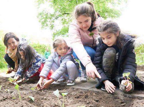 Kinder legen gemeinsam ein Gemüsebeet an